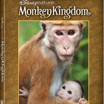 Free Printable Monkey Activity Sheets + Disneynature Monkey Kingdom Now on DVD & Blu-Ray!