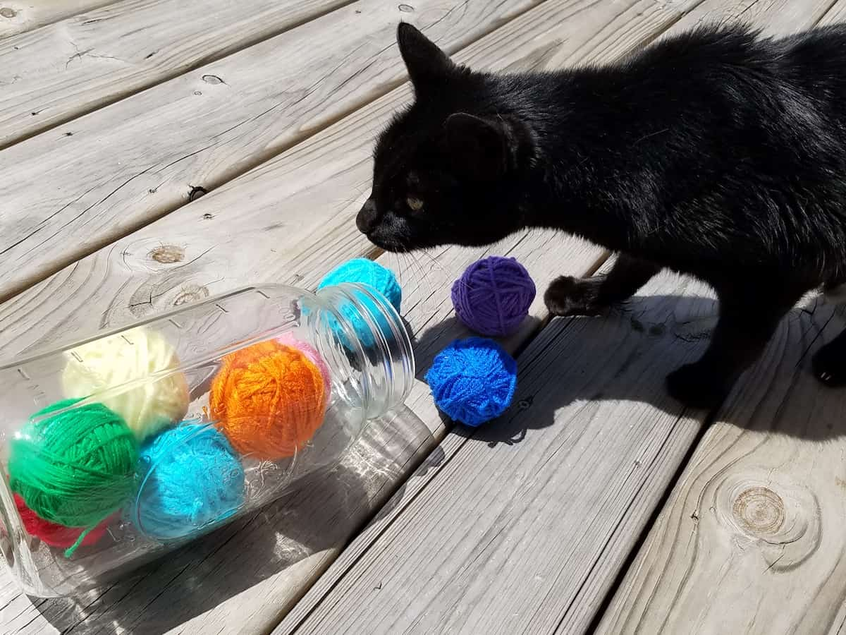 Cat Toys Balls : How to make an easy homemade cat toy no sewing knitting