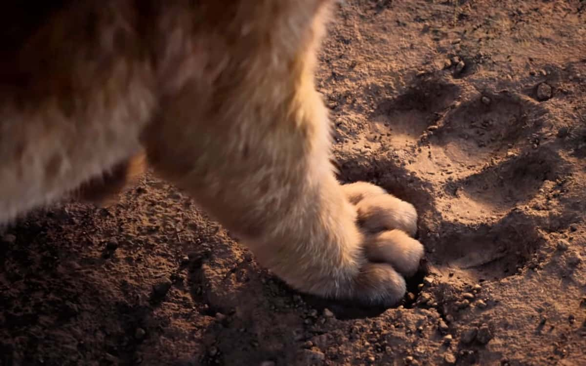 The Lion King 2019 Simba footprint