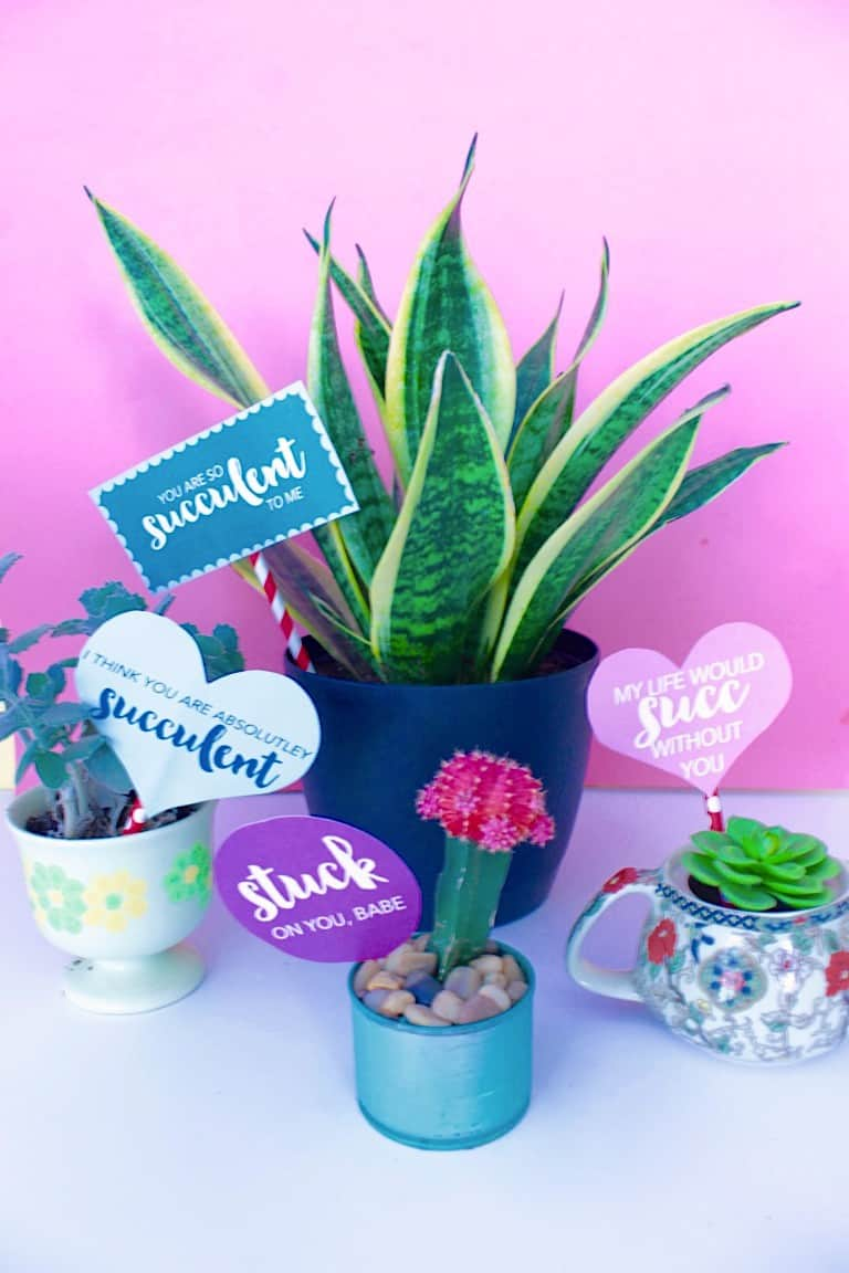 plants with valentines attached