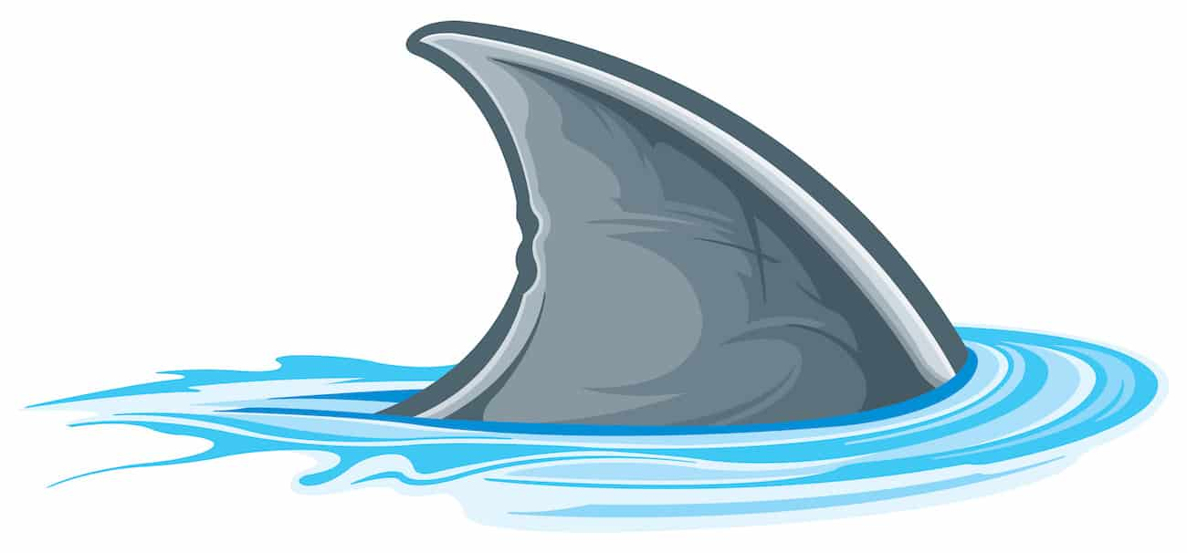 Shark fin illustration swimming through water