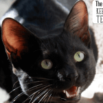 The Easiest Way to Keep Your Cat's Teeth Clean